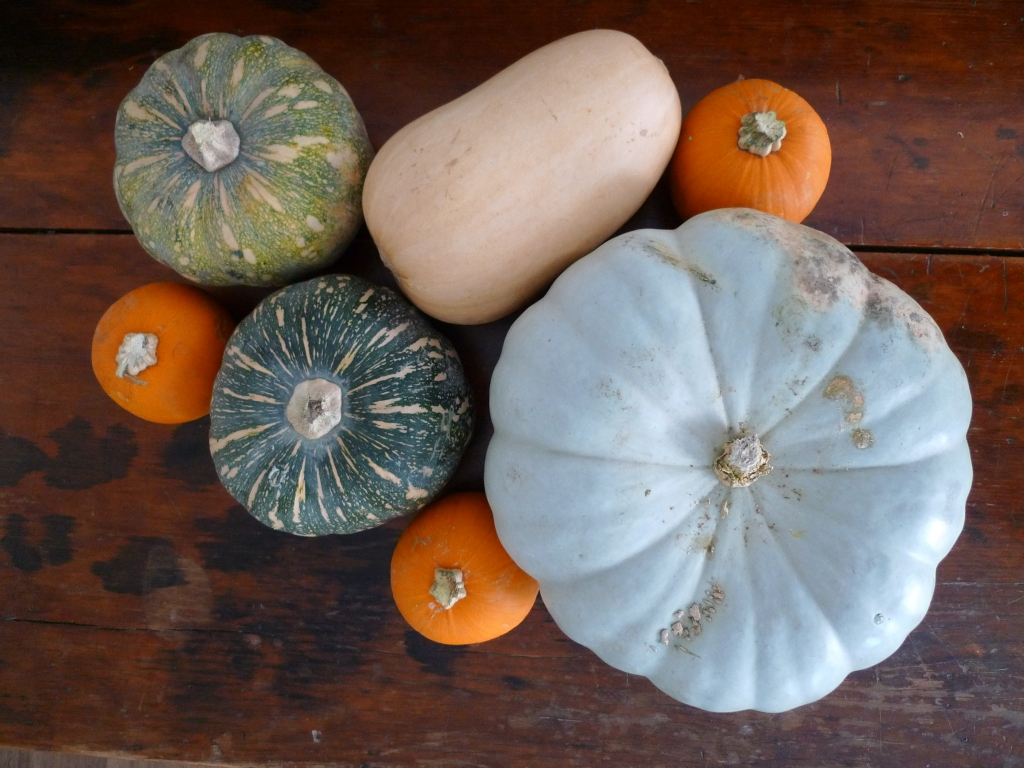 pumpkin types