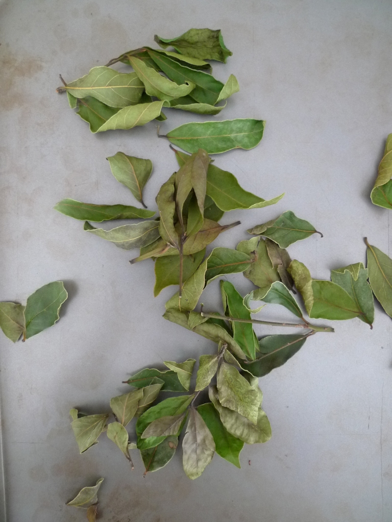 charlotteats dried bay leaves